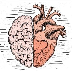 heart brain concept